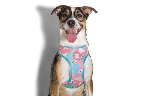 peitoral-para-cachorros_mesh-plus_memphis_zeedog_cachorro_pet_hover