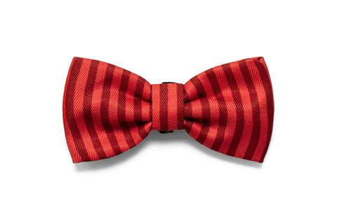 gravata-para-cachorros_fuji_zeedog_cachorro_pet_active