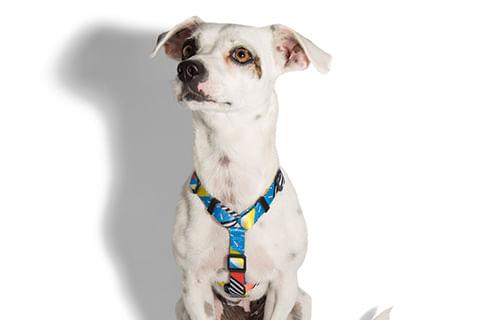 peitoral-para-cachorros_h_brooklyn_zeedog_cachorro_pet_hover