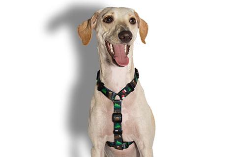 peitoral-para-cachorros_h_woods_zeedog_cachorro_pet_hover