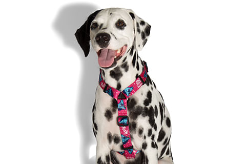 peitoral-para-cachorros_h_uni_unicornio_zeedog_cachorro_pet_hover