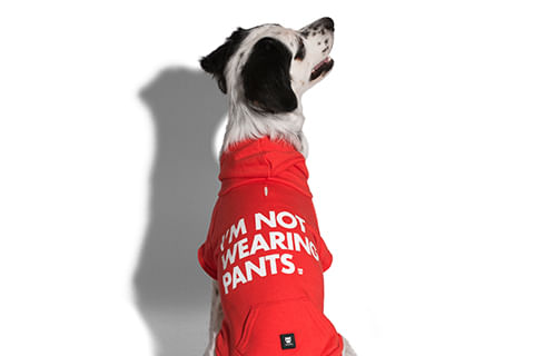 moletom-para-cachorros_vermelho_not_wearing_pants_zeedog_cachorro_pet_hover