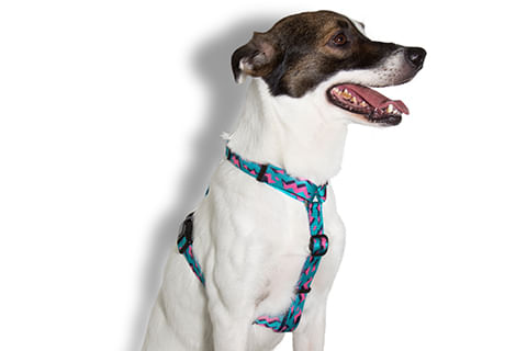 peitoral-para-cachorros_h_crosby_zeedog_cachorro_pet_hover