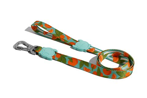 guia-para-cachorros-florida-laranja-azul-zeedog-cachorro-pet-active