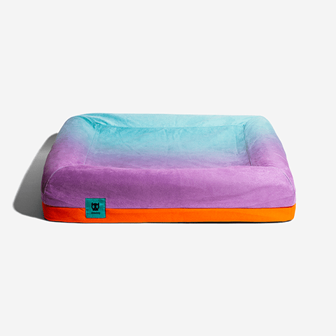 cama-para-cachorros-zee-bed-wave-gradients-degrade-zeedog-cachorro-pet-active