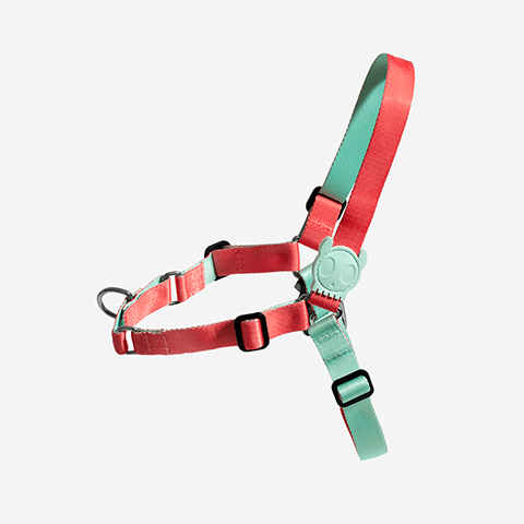 soft-walk-dog-harness-marrakesh-zahara-zeedog-pet-active