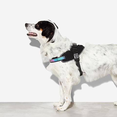 fly-harness-para-cachorros-gotham-zeedog-cachorro-pet-hover