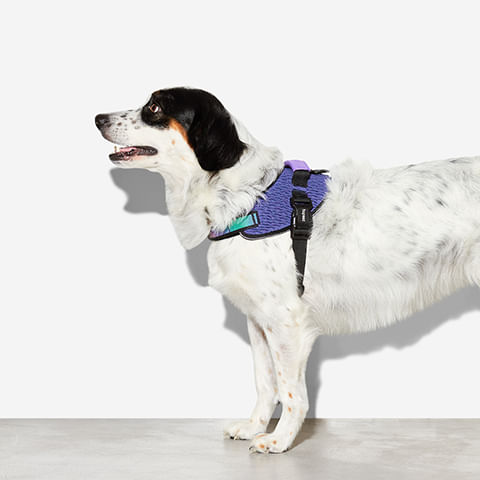 fly-harness-para-cachorros-wicked-zeedog-cachorro-pet-hover