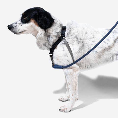 peitoral-anti-puxao-para-cachorros-soft-walk-gotham-zeedog-cachorro-pet-hover