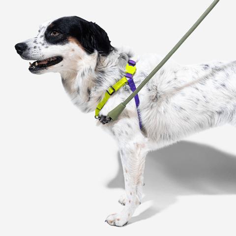 peitoral-soft-walk-cachorros-lemonade-zeedog-pet-hover