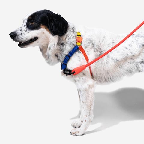 peitoral-soft-walk-cachorros-puzzle-zeedog-pet-hover