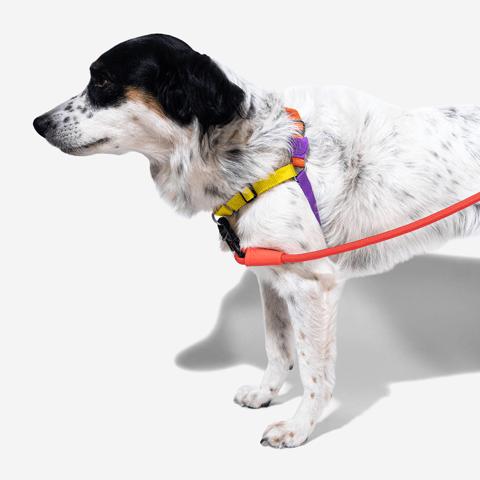peitoral-soft-walk-cachorros-pump-zeedog-pet-hover