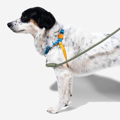 peitoral-anti-puxao-para-cachorros-soft-walk-marrakesh-aziza-zeedog-cachorro-pet-hover