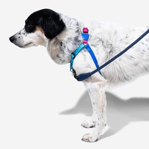 peitoral-soft-walk-cachorros-cooly-zeedog-pet-hover