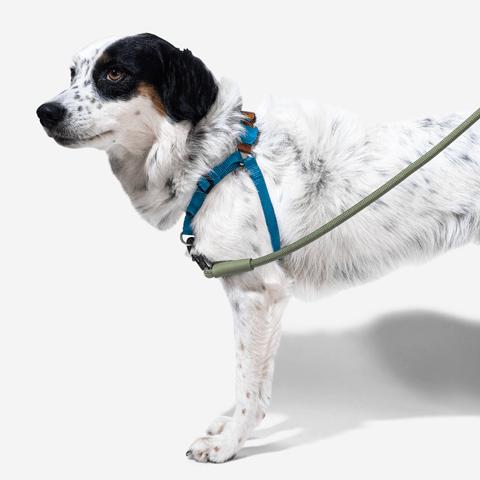 peitoral-soft-walk-cachorros-delta-zeedog-pet-hover