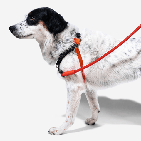 peitoral-anti-puxao-para-cachorros-soft-walk-fatboy-zeedog-cachorro-pet-hover