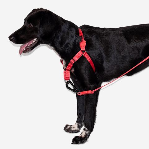 peitoral-soft-walk-para-cachorros-ruff-neon-coral-zeedog-cachorro-pet-hover-