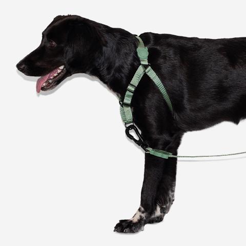 peitoral-soft-walk-para-cachorros-ruff-army-green-zeedog-cachorro-pet-hover-