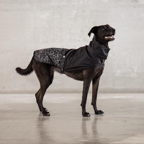 capa-de-chuva-para-cachorros-bel-air-zeedog-cachorros-pet-hover