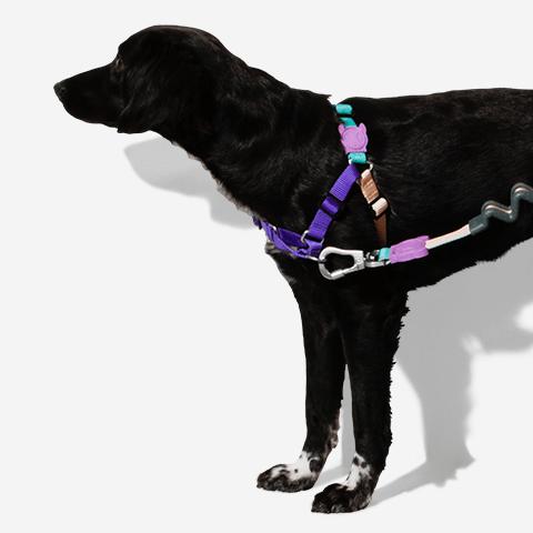 peitoral-soft-walk-cachorros-boogie-zeedog-pet-hover