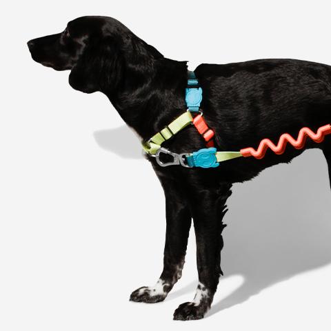 peitoral-soft-walk-cachorros-jumper-zeedog-pet-hover
