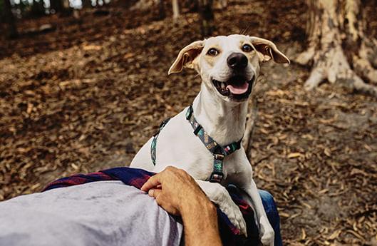 Super Fecho - Zee.Dog