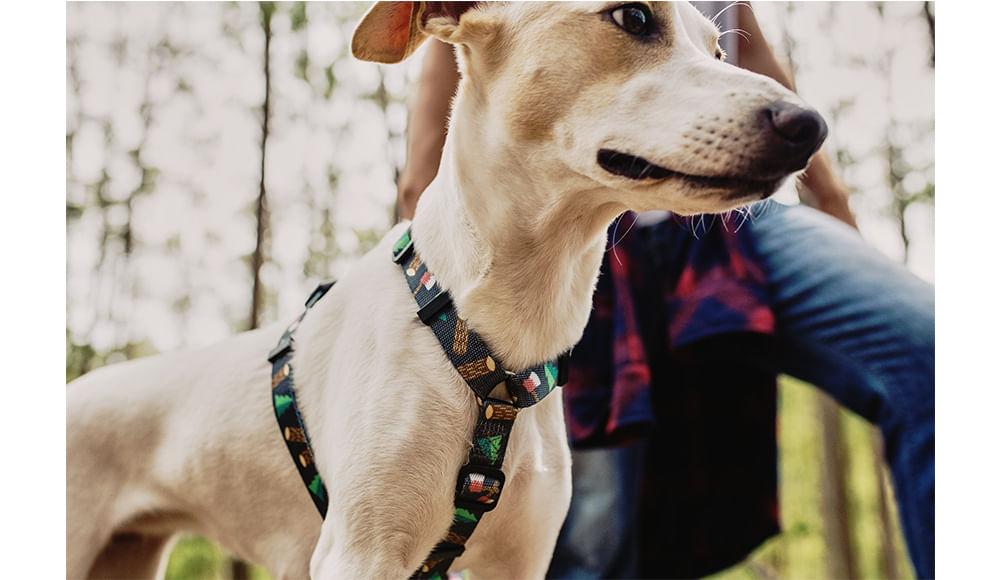 Peitoral H para Cachorros Woods - Zee.Dog