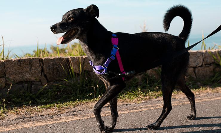 Peitoral para Cachorros Soft Walk Anti Puxão Vega