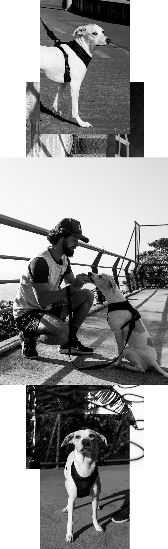 Montagem de Fotos Peitoral Mesh para Cachorros Gotham - Zee.Dog