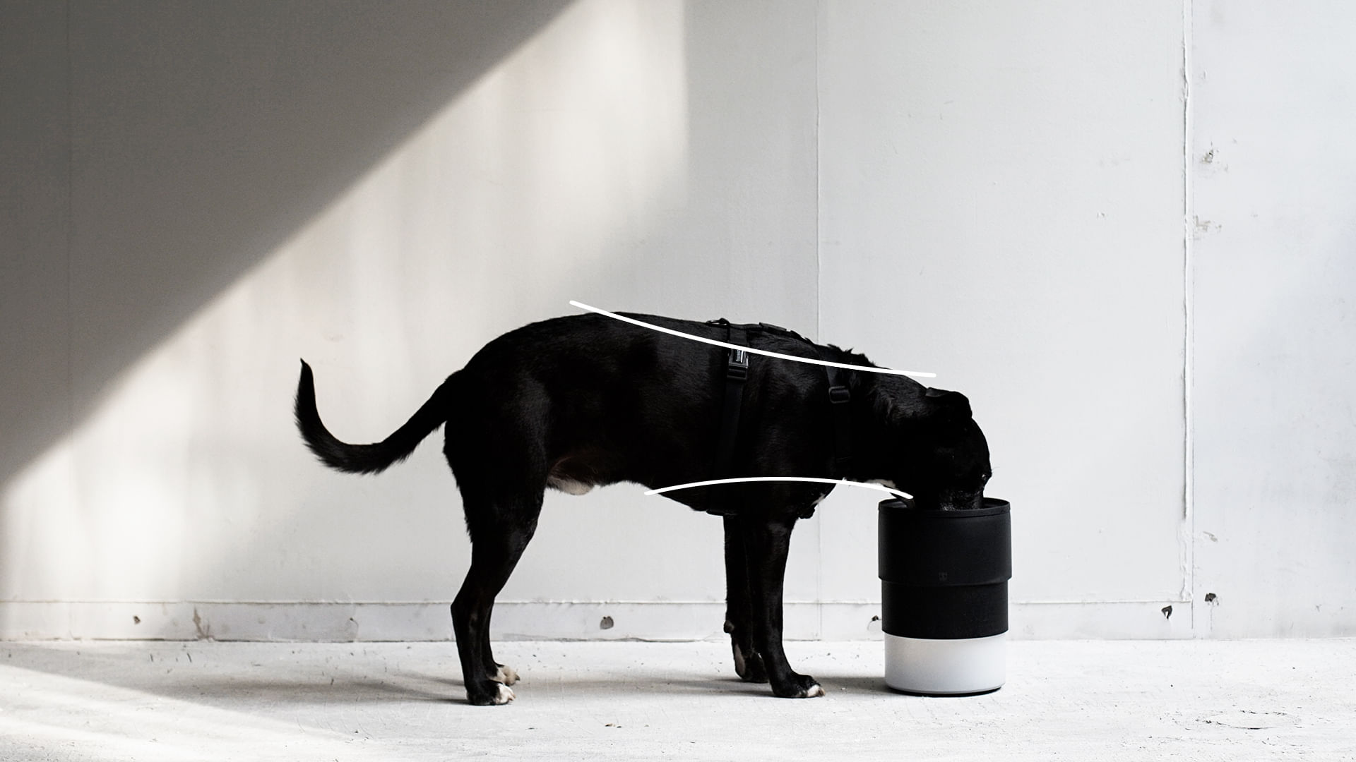 Zee.Bowl - Comedouro ajustável - Postura adequada