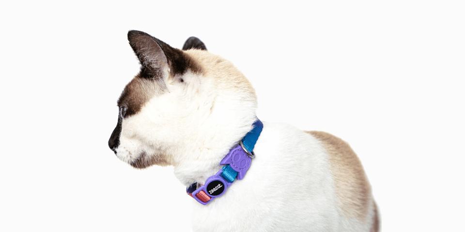 Produtos para Gatos - Coleção Gradients - Zee.Cat